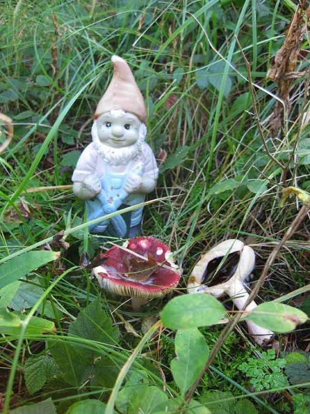 Kabouter-paddenstoel