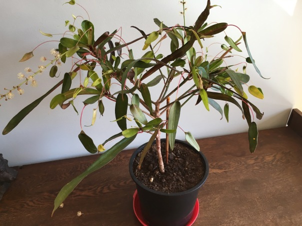 Wat is dit voor soort plant.
